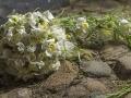 10. Brudebuket med snabel lavet af orkideer og hvide roser mm,